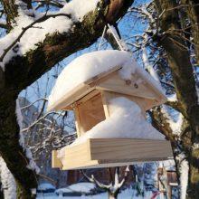 Žiema pajūrio gyventojams nepašykštės staigmenų
