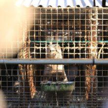 Slovakija ėmėsi veiksmų: uždraudė gyvūnų auginimą dėl kailio