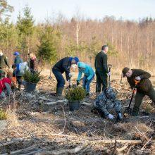 Nacionalinis miškasodis – jau netrukus: gyventojai kviečiami sodinti mišką