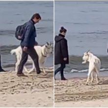 Pajūryje pamatytas vaizdas privertė aiktelėti: į paplūdimį – su ožiu