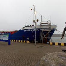 Kruizinių laivų terminale – ir krovininiai laivai