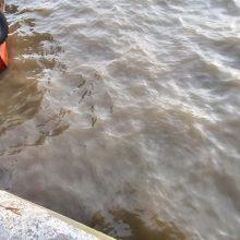 Po įtarimų apie drumzliną vandenį – išvados: į marias plūdo lietaus nuotekos