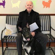 Po ketverių metų pertraukos Baltuosiuose rūmuose vėl apsigyvens šunys
