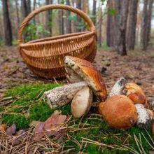 Draudimas riešutauti, grybauti ar uogauti prie svetimų sodybų privačiame miške lieka