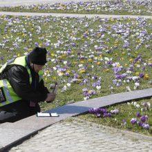 Pajūryje pagaliau įsibėgėja pavasaris
