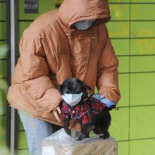 Honkonge dėl nedidelės koronaviruso koncentracijos izoliuotas naminis šuo
