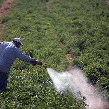 Tyrimas: 1,5 proc. ekologiškų produktų viršyti leistini pesticidų kiekiai