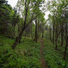 Daugiau nei pusei vietinių Europos medžių rūšių gresia išnykimas