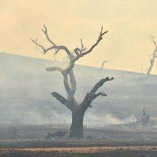 Australijos ugniagesiai: labiausiai nukentėjusioje valstijoje suvaldyti visi gaisrai