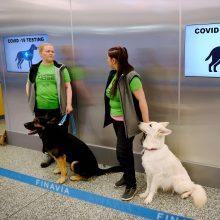 Tyrėjai: eksperimentas su COVID-19 užuodžiančiais šunimis davė teigiamų rezultatų
