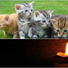 Neįtikėtinas žiaurumas Kupiškyje: rasti nuskandinti penki kačiukai