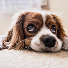 B. Kymantaitė: Lietuvoje tik 10 proc. šunų ir kačių yra paženklinti mikroschemomis
