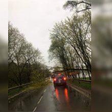 Panemunėje ant automobilio nuvirto medis