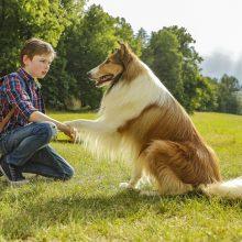 Garsiausias pasaulio šuo: dvylika faktų apie Lesę