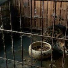 Iš nelegalaus veisėjo Marijampolėje konfiskuoti 37 gyvūnai, skirta 2 tūkstančių eurų bauda