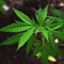 Narkotikų turėjusiam jaunuoliui nuo pareigūnų pasprukti nepavyko