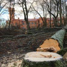 Meras apie daugybę išpjautų medžių prie Raudonės pilies: norime miško ar parko?