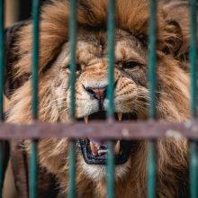 Zoologijos sodas skaičiuoja paskutines dienas iki renovacijos pradžios
