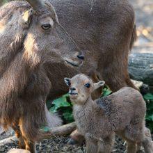 Pakalbinti išmaniuoju telefonu jau galima ir zoologijos sodo gyvūnus