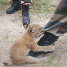 Kaune pas gyvūnų globėjus atsidūrė lūšiukas: žaismingos nuotraukos pavergia