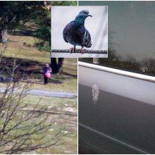 Niršta: kaimynės lesinami paukščiai apdergia visą kiemą
