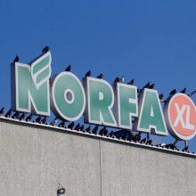 """""""Norfos"""" salės darbuotojui nustatytas COVID-19: pirkėjams – svarbi informacija"""