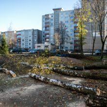 Įžūlu: Kaune medžius išpjovė be leidimų – gresia tūkstantinė bauda