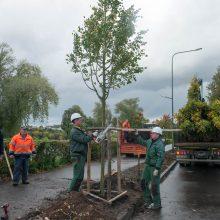 Miestas vėl sodins naujus medžius