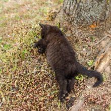 Internete liejasi apmaudas: judrioje Kauno gatvėje kačiukus sutraiškė mašinos