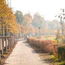Skirtingas Kauno erdves praturtins šimtai medžių
