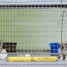 Kaune bešeimininkių gyvūnų priežiūra perleista į kitas rankas