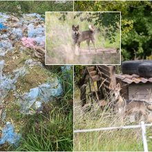 Atgarsiai iš Žiegždrių: baisiomis sąlygomis laikomų šunų savininkui skirta bauda
