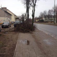 Įspėjimas vairuotojams: dėl stipraus vėjo ant kelio gali būti prikritusių medžių