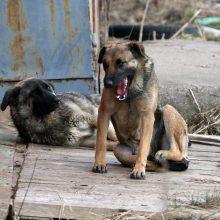 Profesorius E. Paliokas už žiaurų elgesį su šunimis gali būti pasiųstas už grotų