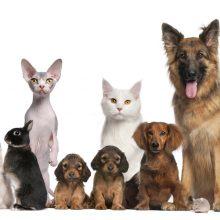 Uostamiestyje – dėmesys gyvūnams