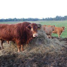 Apdraudusieji ūkinius gyvūnus gali susigrąžinti dalį išlaidų