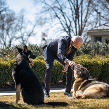 JAV pirmosios poros šunys sugrįžo į Baltuosius rūmus