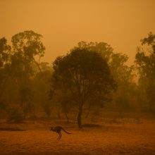 Lietuviai aukoja nuo pragariškų gaisrų nukentėjusiai Australijai