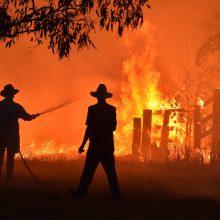 Australijos miškų gaisrai: žuvusių žmonių skaičius padidėjo iki keturių