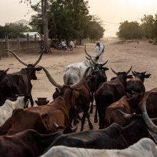 Gyvulių vagys nužudė ne mažiau kaip 35 kaimo gyventojus