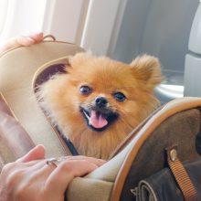 Kaip pasiruošti skrydžiui lėktuvu drauge su augintiniu?