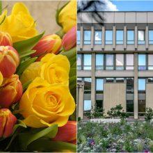 Seimas už 66 tūkst. eurų ketina pirkti skintų gėlių