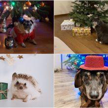 """""""Au"""" ir """"miau"""" Kalėdos <span style=color:red;>(""""Kauno dienos"""" skaitytojų augintinių nuotraukos)</span>"""