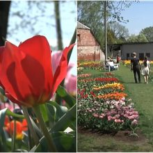 Būriai žmonių iš visos Lietuvos plūsta į Kauno botanikos sodą