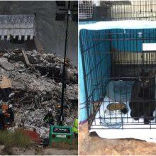 Floridoje daugiaaukščio pastato griūtį išgyvenęs katinas grąžintas šeimai