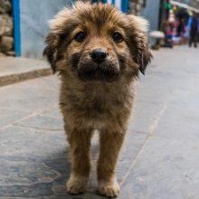 """""""Bejėgį"""" šuniuką Filipinuose išgelbėjusi norvegė mirė nuo pasiutligės"""