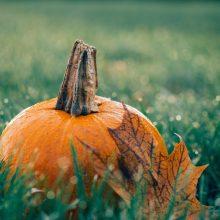 Orai: rugsėjo ir spalio sandūra jau primins rudenį