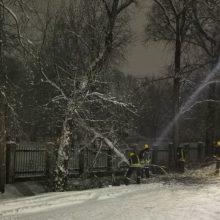 Ugniagesiai daugiau nei 150 kartų vyko šalinti nuvirtusių medžių