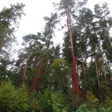 Aplinkos ministerija siūlo naują mokestį už nekertamą mišką