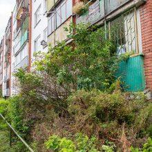 Apsileidimas ar meilė gamtai: vaizdas pro daugiabučio langą – tarsi į džiungles